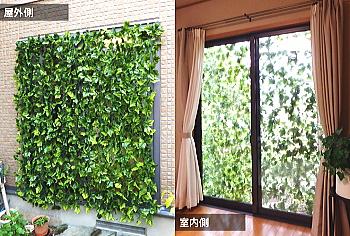 枯れない緑のカーテン 断熱効果10.7℃
